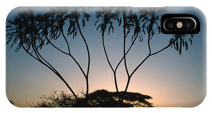 Dom Palms IPhone X Case featuring the photograph Dom Palms In Kenya by Carl Purcell