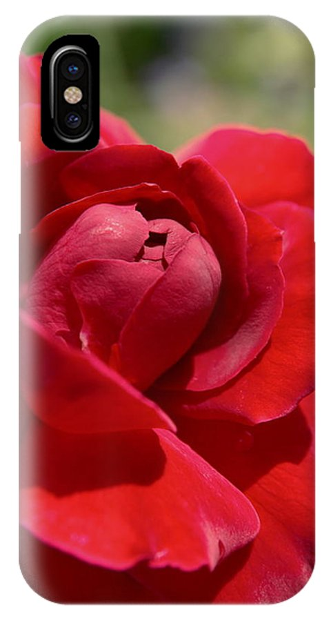Island IPhone X Case featuring the photograph Dominica Red Rose by Tropical Ties Dominica