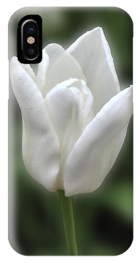 Tulip IPhone X Case featuring the photograph Don't Forget Mom by Rich Stedman