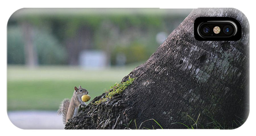 Squirrel's Lunch IPhone X Case featuring the photograph Don't Look While I Hide It by Arlin Harder