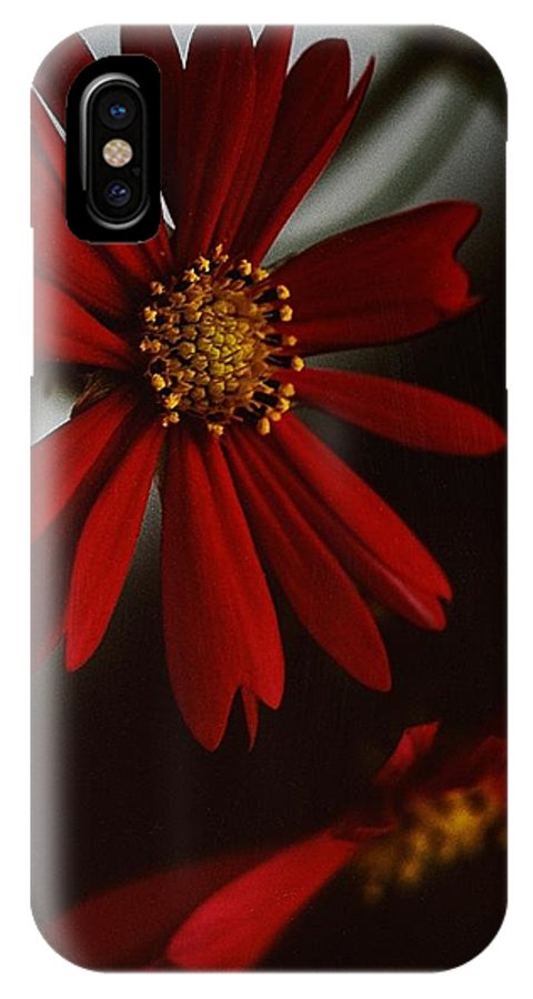 Floral IPhone X Case featuring the photograph Double Gerbera by Tracey Vivar