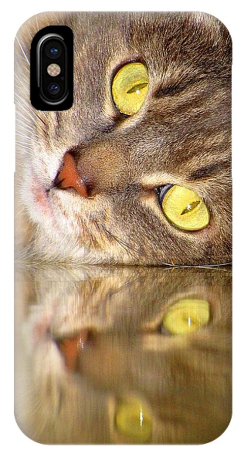 Cats IPhone X Case featuring the photograph Double Vision by Lori Pessin Lafargue