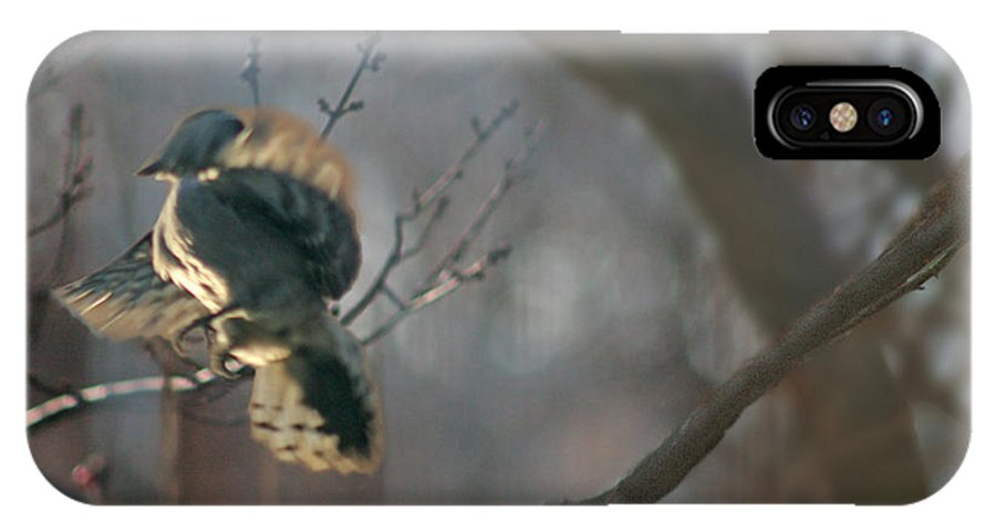 Nature IPhone X Case featuring the photograph Downey Woodpecker by Steve Karol