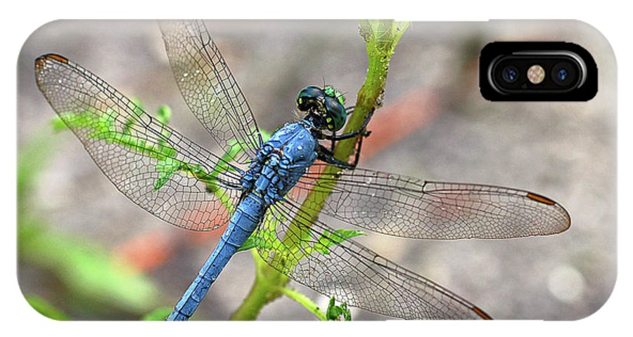 Dragonfly IPhone X Case featuring the photograph Dragonfly Delight by Nanette OHara