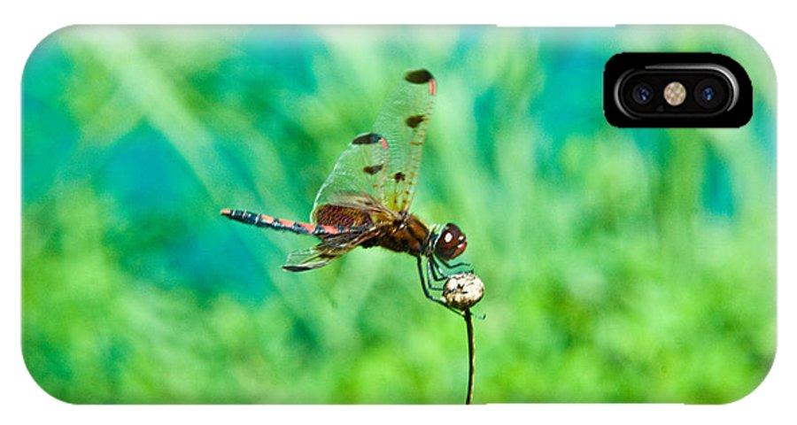 Dragonfly IPhone Case featuring the photograph Dragonfly Hanging On by Douglas Barnett