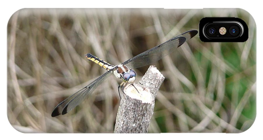 Wildlife IPhone Case featuring the photograph Dragonfly I by Kathy Schumann