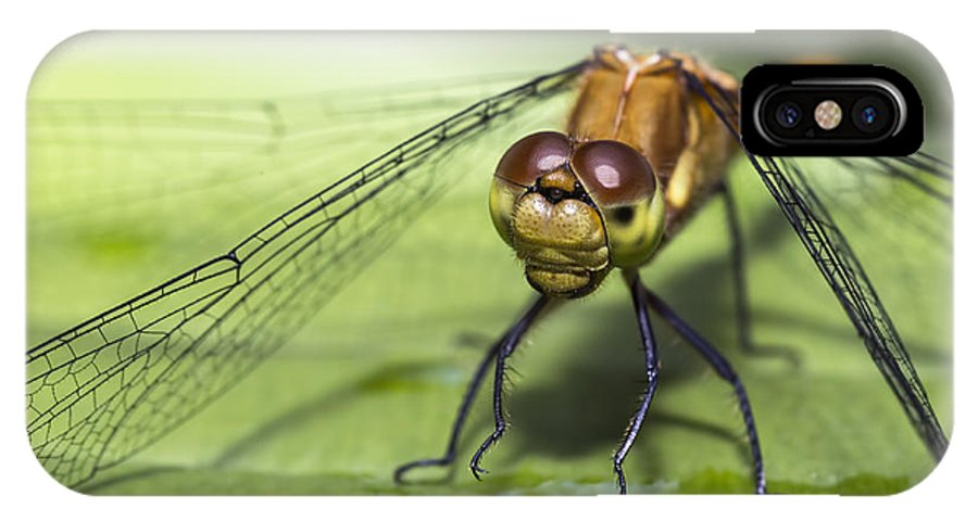 Dragonfly IPhone X Case featuring the photograph Dragonfly by Luis Torres