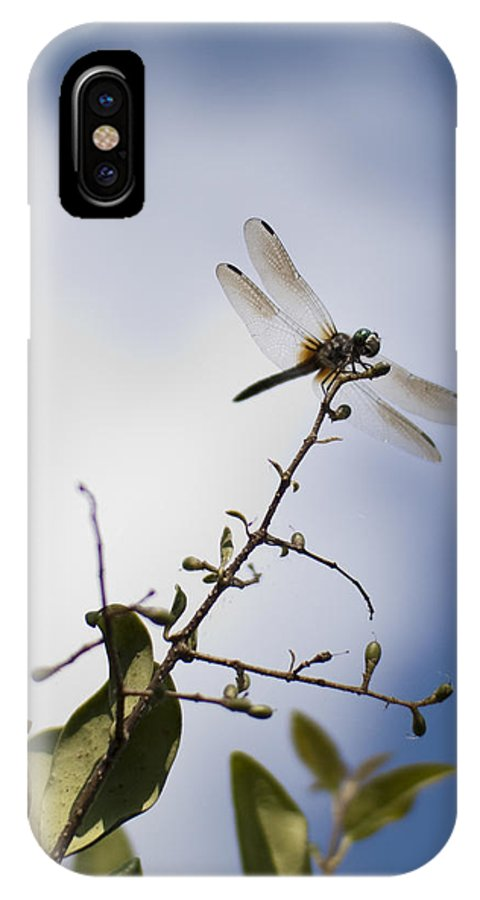 Dragonfly IPhone X Case featuring the photograph Dragonfly On A Limb by Dustin K Ryan