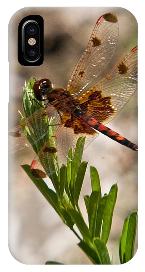 Dragonfly IPhone X Case featuring the photograph Dragonfly Resting by Douglas Barnett
