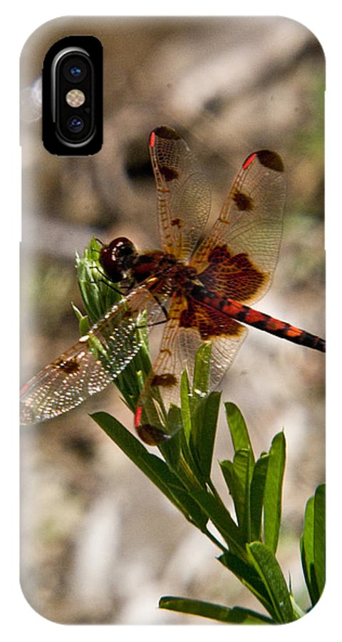 Odonata IPhone X Case featuring the photograph Dragonfly Resting On The Green by Douglas Barnett