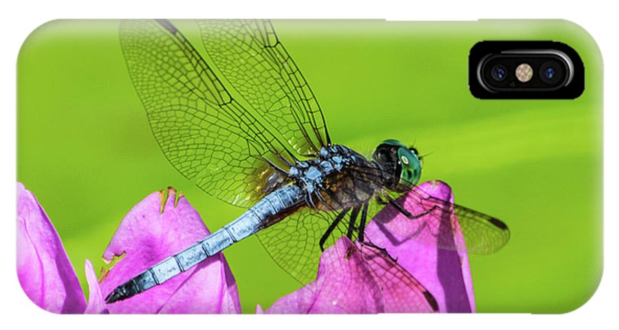 Dragonfly IPhone X Case featuring the photograph Dragonfly Resting by Robert Edgar