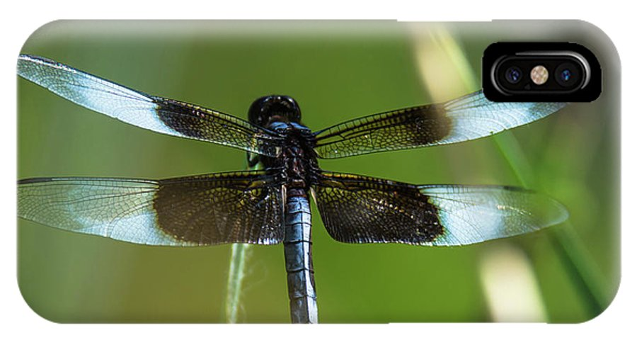 Nature IPhone X / XS Case featuring the photograph Dragonfly by Steve Marler