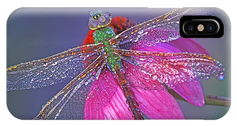 Dew Covered Dragonfly Rests On Purple Cone Flower IPhone X Case featuring the photograph Dreaming Dragon by Bill Morgenstern