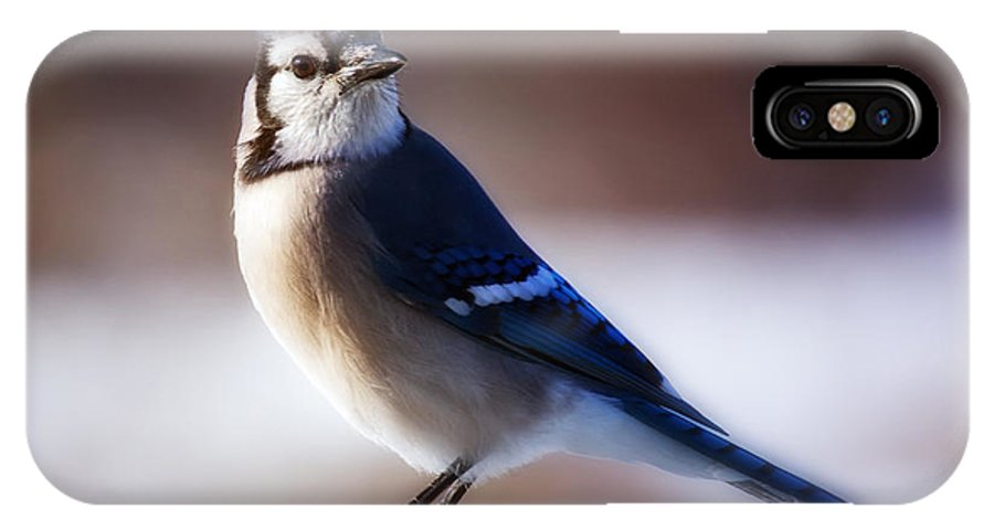 Bird IPhone X Case featuring the photograph Dreamy Blue Jay by Al Mueller