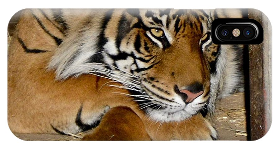 Tiger IPhone X Case featuring the photograph Dreamy by Jacqueline Howe