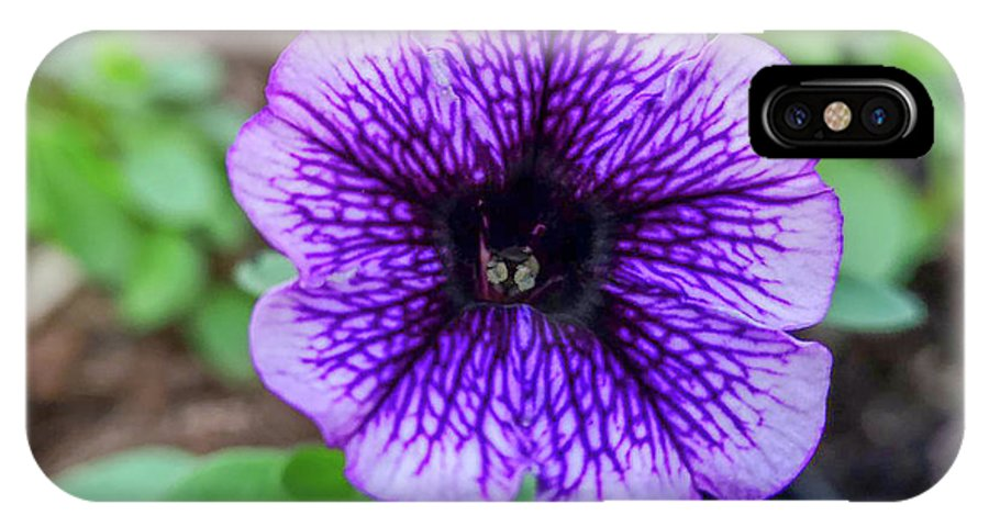 Flowers IPhone X Case featuring the photograph Dsc_1513 Web by Safe Haven Photography Northwest