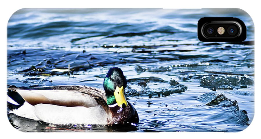 Duck IPhone X Case featuring the photograph Duck by Brenton Woodruff