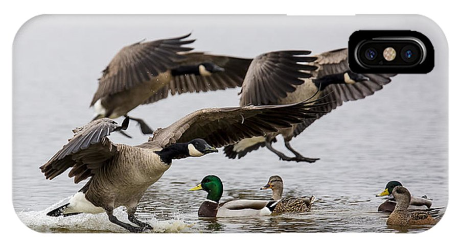 Canada Goose IPhone X Case featuring the photograph Duck Ducks by Randy Hall