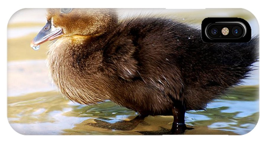 Teresa Blanton IPhone X Case featuring the photograph Duckling In Water by Teresa Blanton