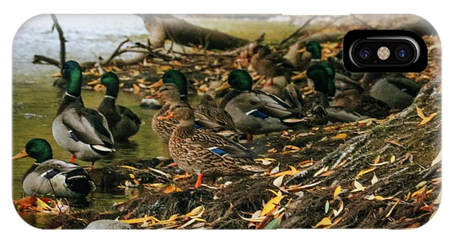Ducks IPhone X Case featuring the photograph Ducks 3 by Calyse Knox