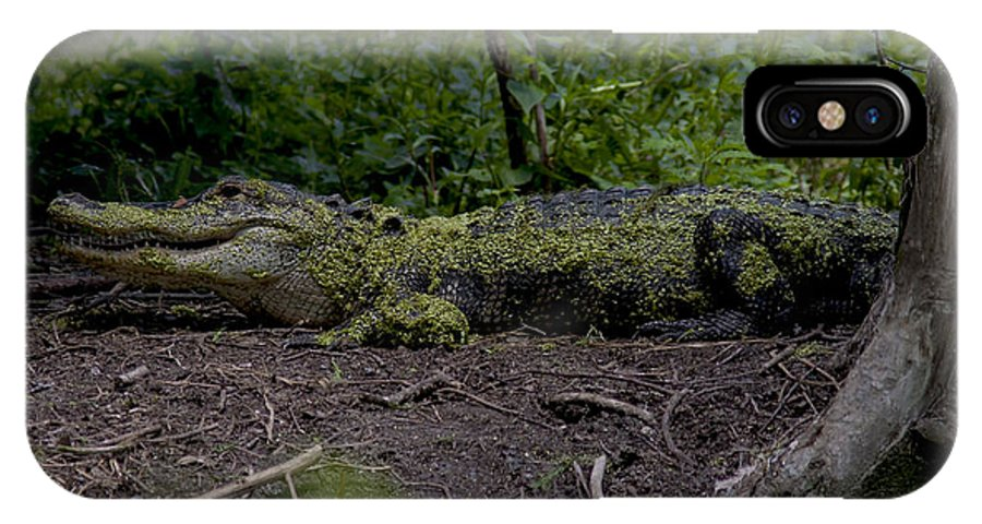 Alligator IPhone X Case featuring the photograph Duckweed Camouflage by Mary Ellen Urbanski