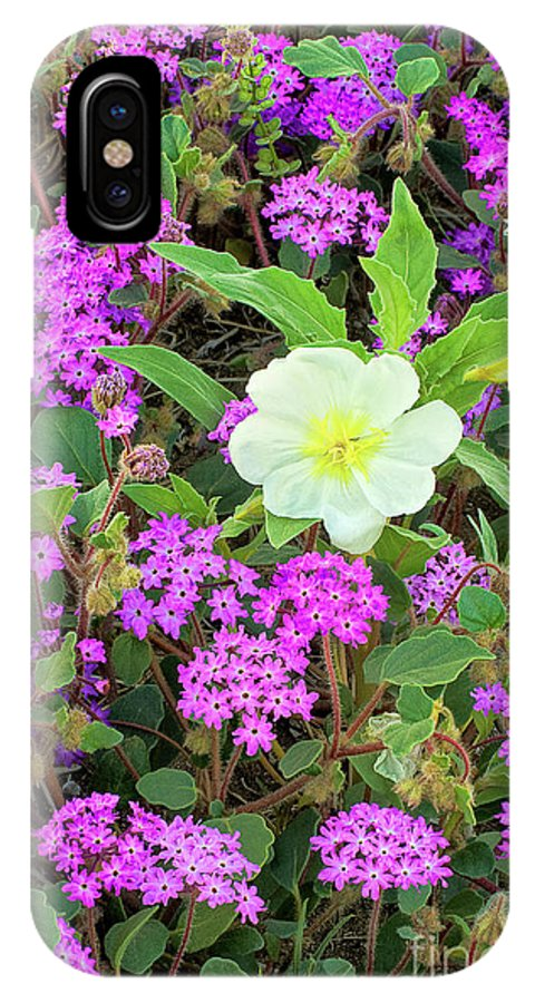 Dave Welling IPhone X Case featuring the photograph Dune Primrose Oenothera Deltoides And Purple Sand Verbena by Dave Welling