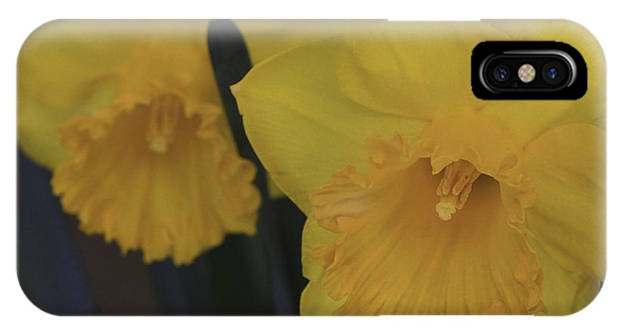 Daffodils IPhone X Case featuring the photograph Duo In Daffodils by Deborah Benoit