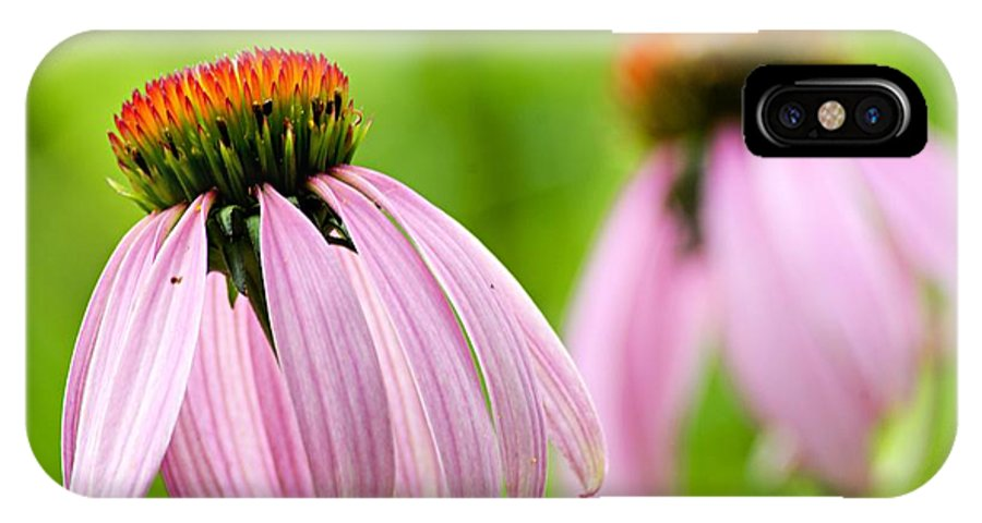 Cone Flowers IPhone X Case featuring the photograph Duplication by Larry Ricker