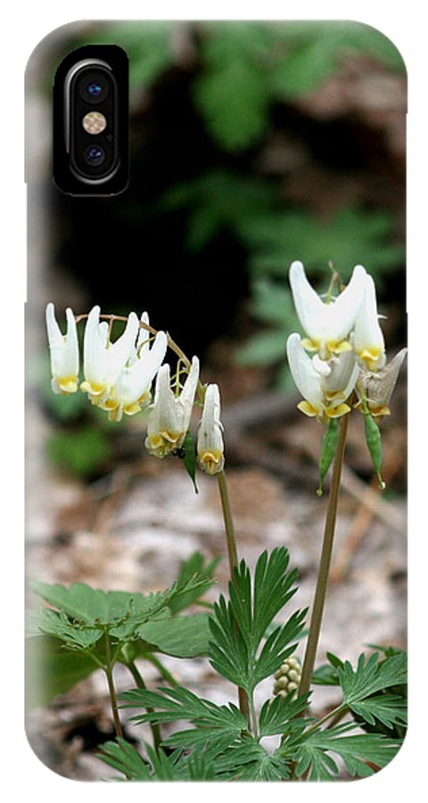 Dutchmans IPhone X Case featuring the photograph Dutchmans Breeches by George Jones