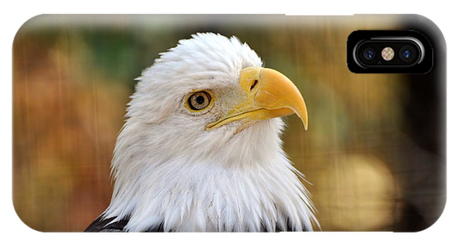 Eagle IPhone X / XS Case featuring the photograph Eagle 6 by Marty Koch
