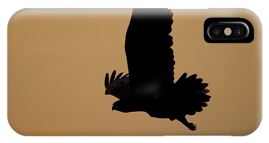 Eagle IPhone X Case featuring the photograph Eagle At Sunset by Cliff Norton