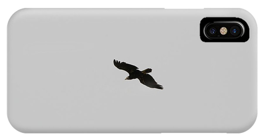 Washington IPhone X Case featuring the photograph Eagle In Flight by Linda Kerkau