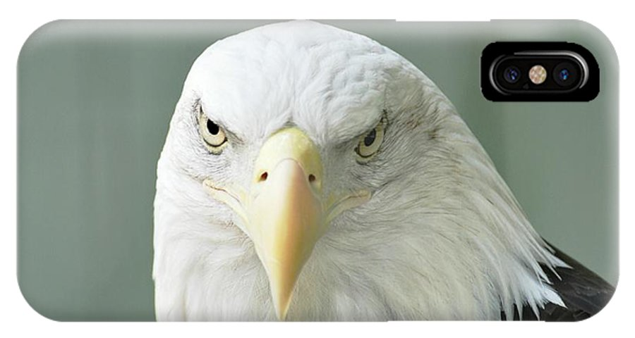 Eagle IPhone X Case featuring the photograph Eagle by Jo-Ann Matthews