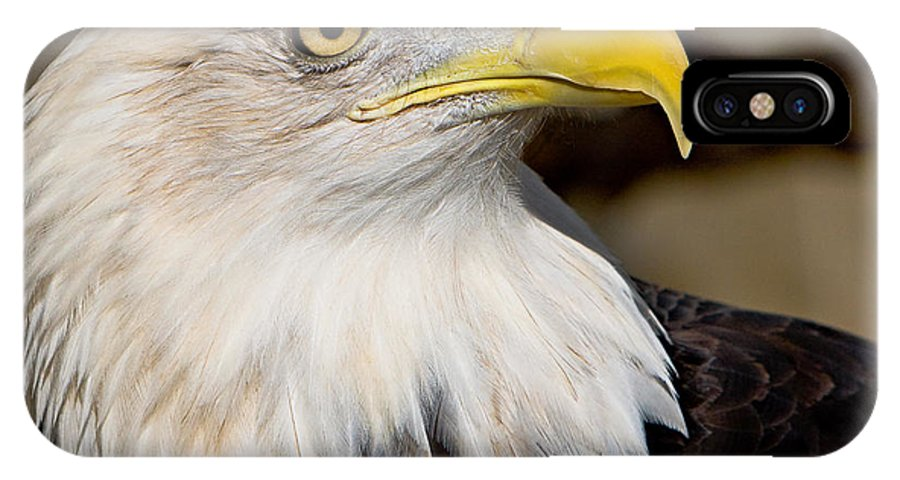Eagle IPhone X Case featuring the photograph Eagle Power by William Jobes