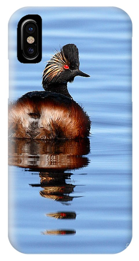 Grebe IPhone X Case featuring the photograph Eared Grebe Reflecting On Calm Water by Max Allen