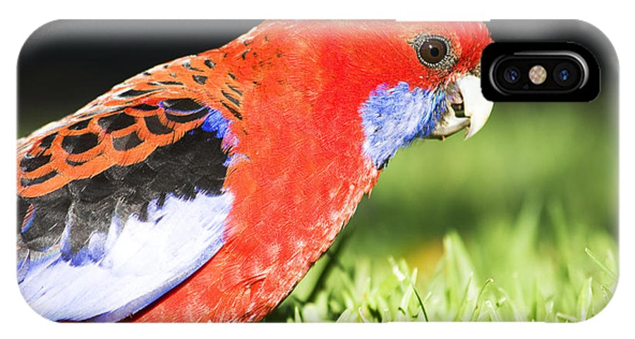 Parrot IPhone X / XS Case featuring the photograph Early Bird by Jorgo Photography - Wall Art Gallery