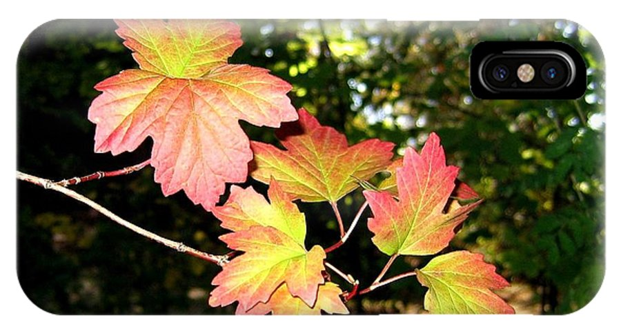 Autumn IPhone X Case featuring the photograph Early Days Of Autumn by Will Borden