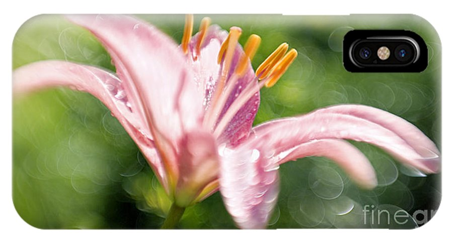 Easter Lily Lilium Lily Flowers Flower Floral Bloom Blossom Blooming Garden Nature Plant Petals Plants Grow Species Garden One Single 1 Petals Close-up Close Up Cultivate Botanical Botany Nature IPhone Case featuring the photograph Easter Lily 1 by Tony Cordoza
