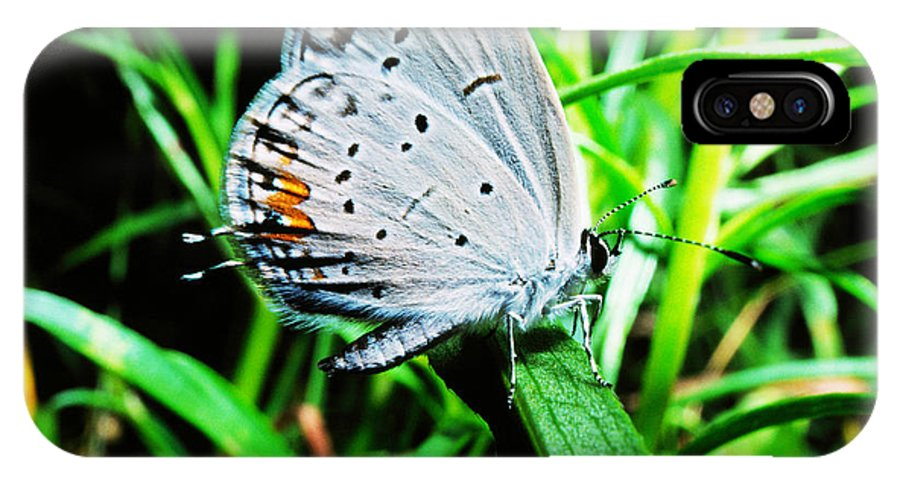 Eastern Tailed Blue Butterfly IPhone X Case featuring the photograph Eastern Tailed Blue Butterfly by Thomas R Fletcher
