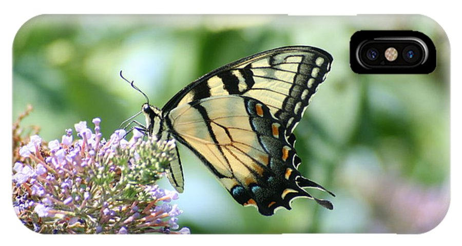 Eastern IPhone X / XS Case featuring the photograph Eastern Tiger Swallowtail 2 by Tammy Finnegan