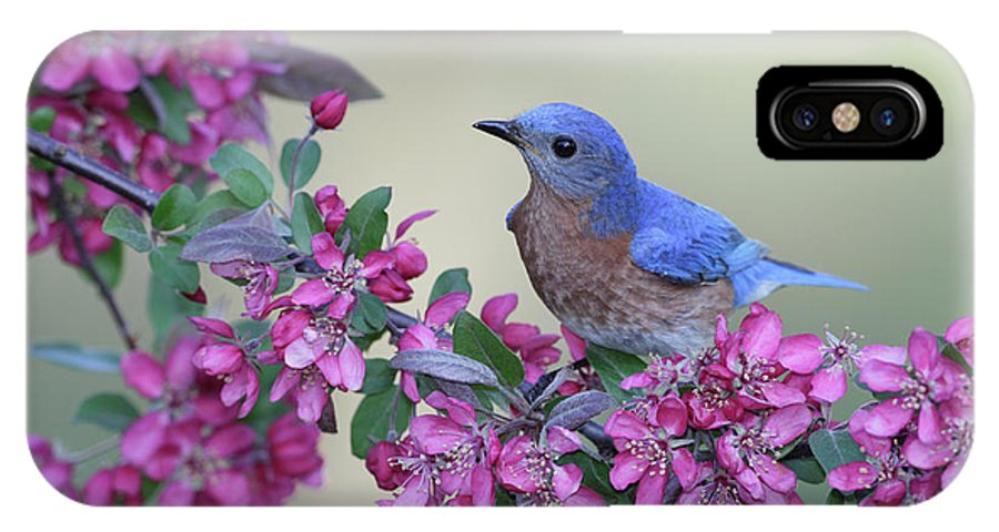 Bird IPhone X Case featuring the photograph Easternbluebird2 by Tammy Wolfe
