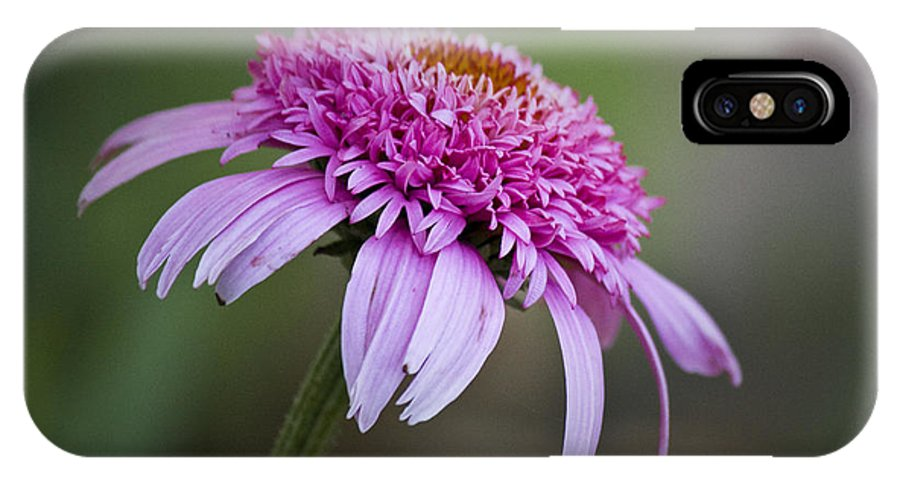 Pink IPhone X Case featuring the photograph Echinacea Pink Double Delight by Teresa Mucha