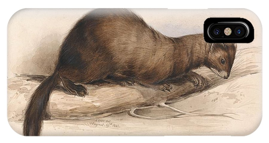 Art IPhone X Case featuring the painting Edward Lear - A Weasel by Edward Lear
