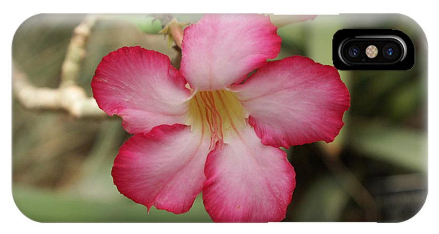 Floral IPhone X Case featuring the photograph Elegant by Shelley Jones