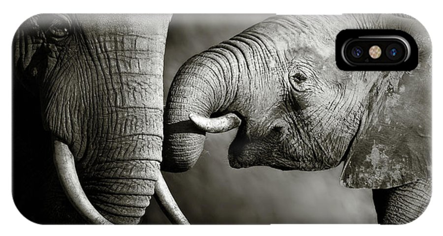 Elephant; Interact; Touch; Gently; Trunk; Young; Large; Small; Big; Tusk; Together; Togetherness; Passionate; Affectionate; Behavior; Art; Artistic; Black; White; B&w; Monochrome; Image; African; Animal; Wildlife; Wild; Mammal; Animal; Two; Moody; Outdoor; Nature; Africa; Nobody; Photograph; Addo; National; Park; Loxodonta; Africana; Muddy; Caring; Passion; Affection; Show; Display; Reach IPhone X Case featuring the photograph Elephant Affection by Johan Swanepoel