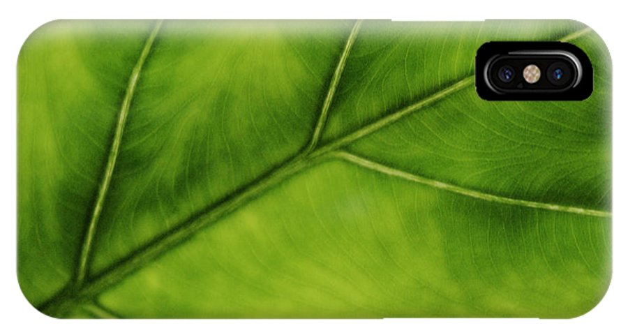 Leaf IPhone X Case featuring the photograph Elephant Ear by Marilyn Hunt