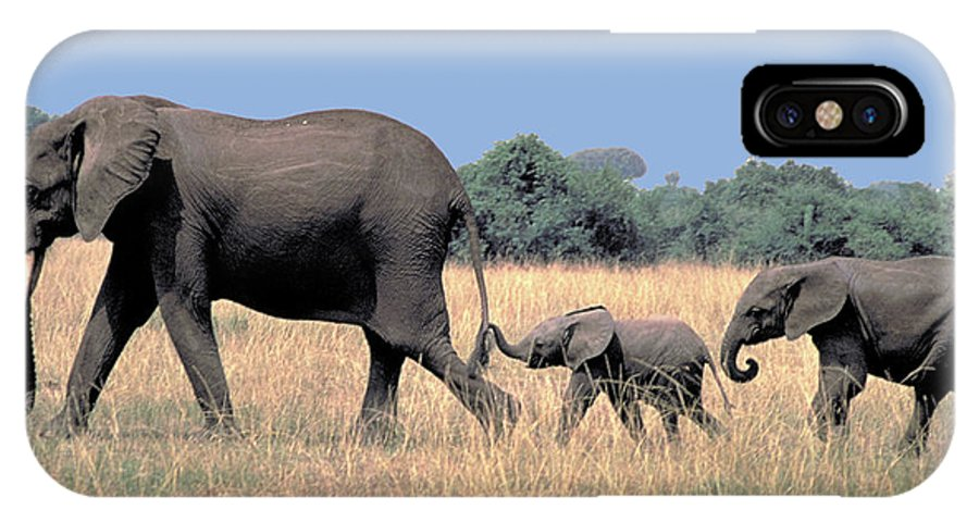 Elephant IPhone Case featuring the photograph Elephant Family by Carl Purcell