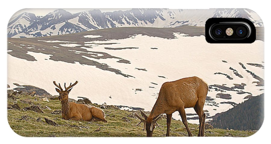 Elk IPhone Case featuring the photograph Elk Bulls In The Highlands Of Colorado by Max Allen