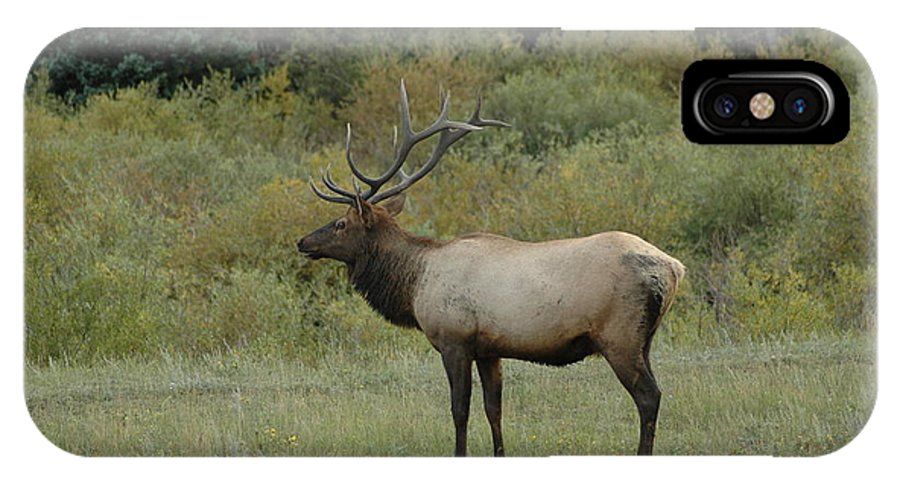 Elk IPhone X Case featuring the photograph Elk by Kathy Schumann