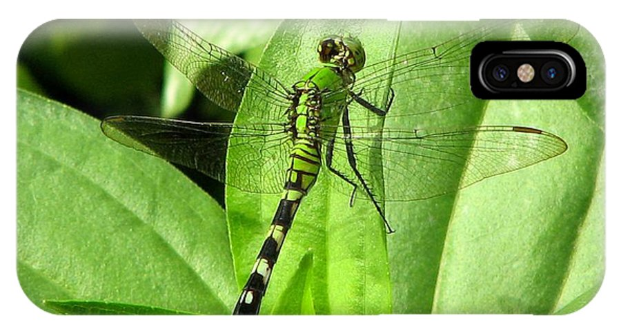 Bug IPhone Case featuring the photograph Emerald Dragonfly by David Dunham